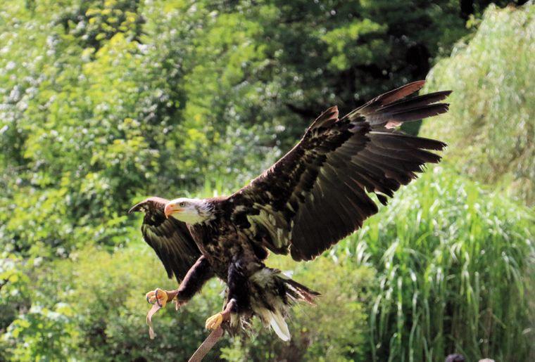 SIKYPARK-aigle-jura bernois © SIKYPARK.jpg