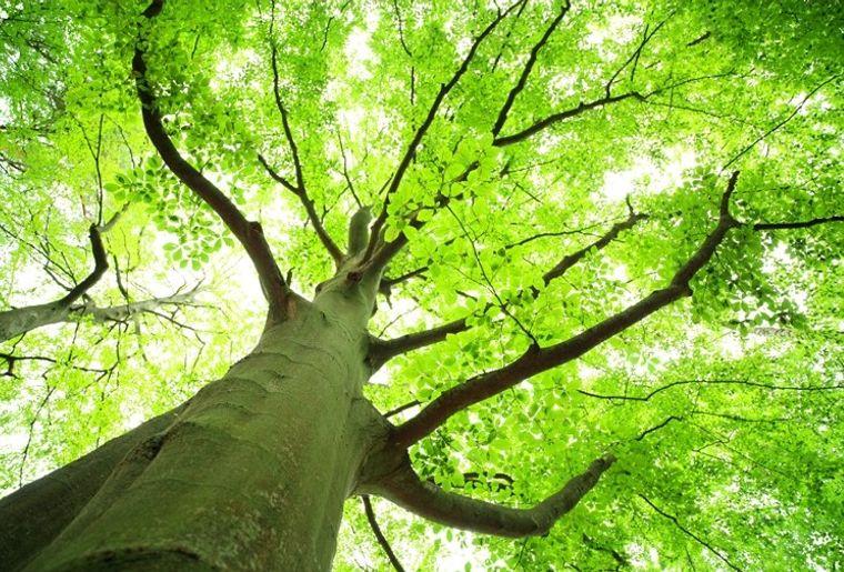 Mai-mois-de-larbre-et-des-forêts.jpg