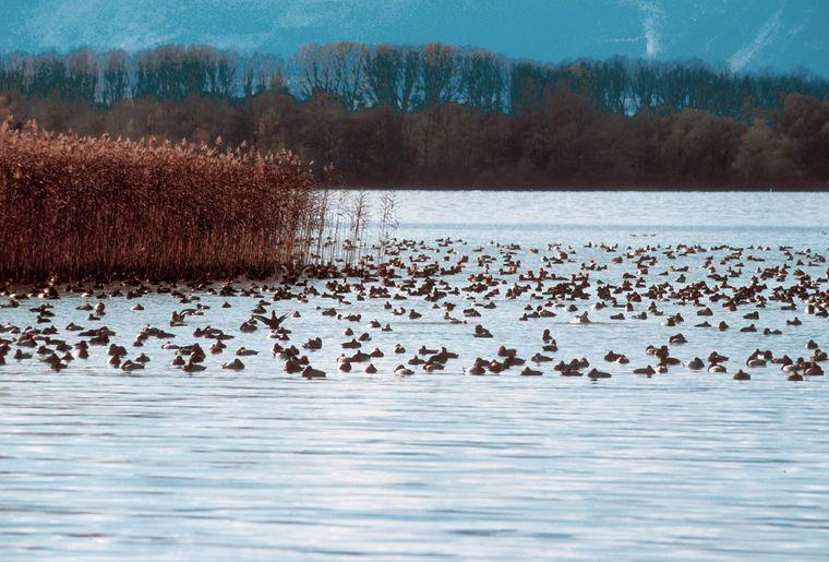 grande-caricaie-oiseaux_3000.jpg