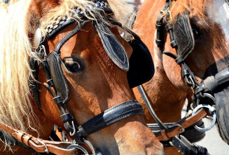 chevaux_2000.jpg