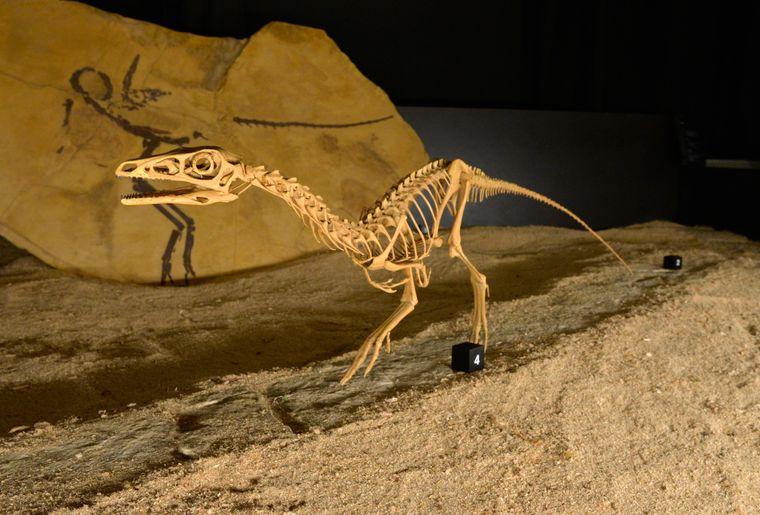 expo-dinos-jurassica-museum.jpeg