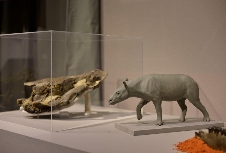 expo-dinos-jurassica-museum-2.jpg