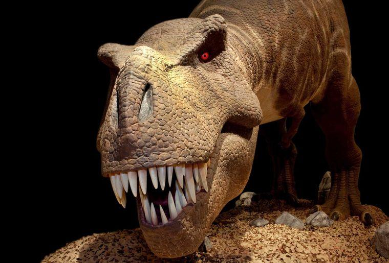 expo-t-rex-museum-berne.jpg