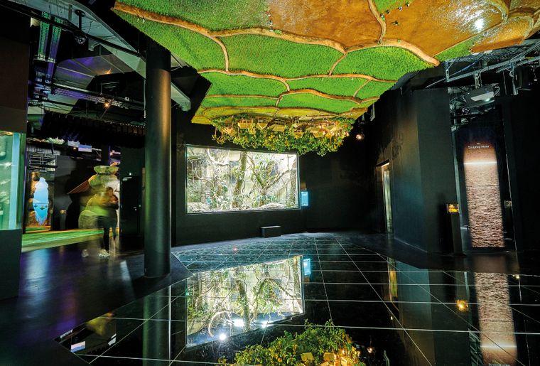 aquatis-scenographie-aquarium.jpg