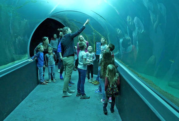 aquatis-tunnel-mediatrice-enfants.jpg