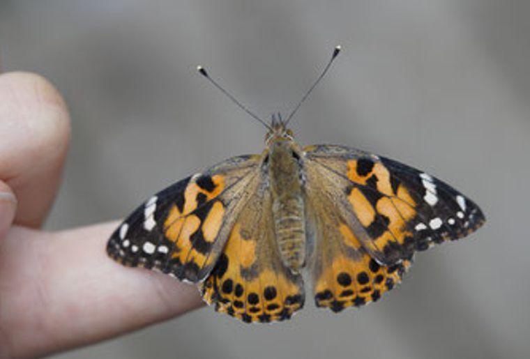 papillons-et-autres-insectes-avec-lecoin-nature.jpg