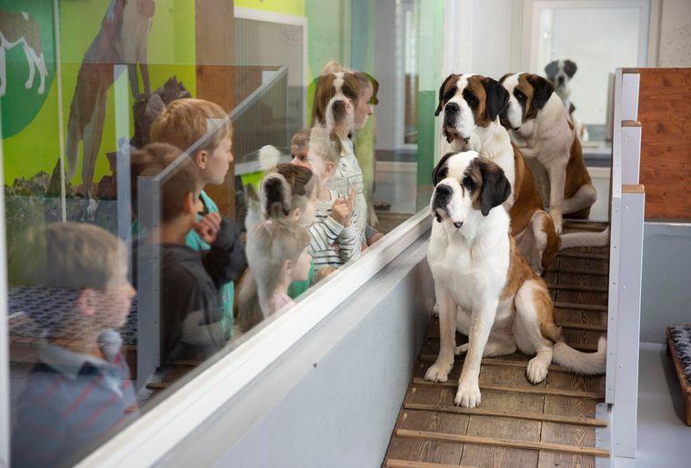 Barryland-musee-chiens-saint-bernard.jpg