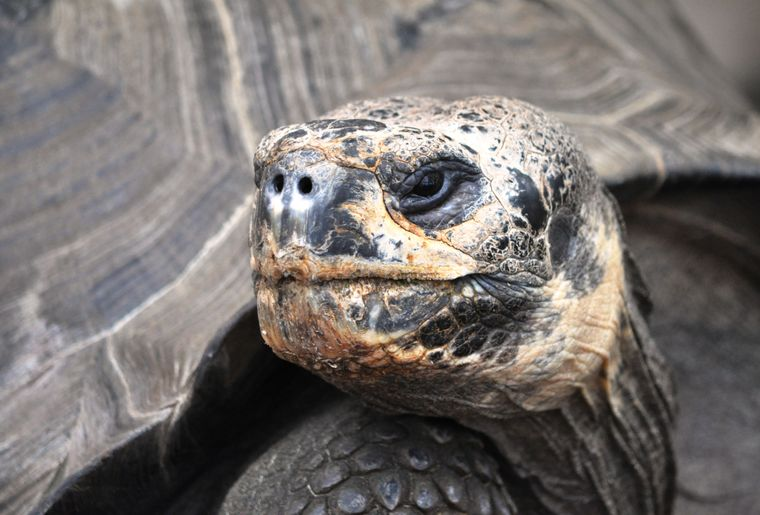 portrait tortue géante copie.jpg