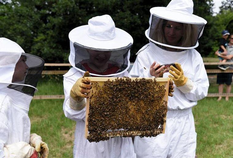 FetedesEvaux-abeilles (Small) (002).jpg