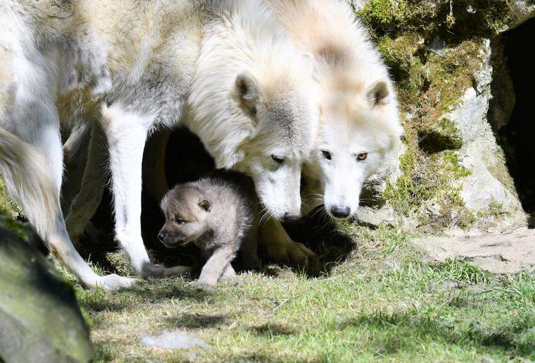 Photo de famille_corrigé_Zoo de Servion.jpg