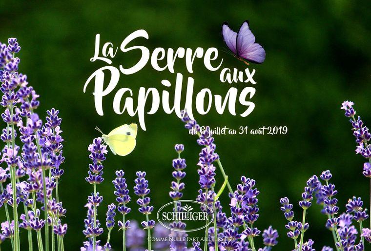 SCHILLIGER_Serre-Papillon-lavande.jpg