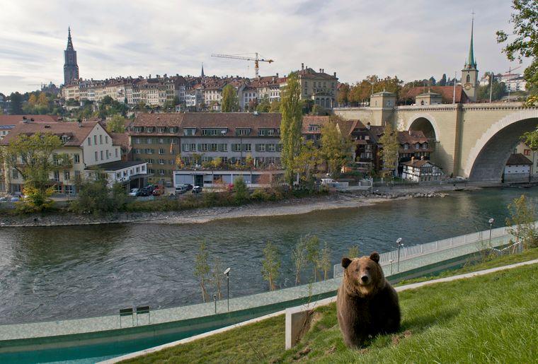 balade-berne-aar-ours-zoo.jpg