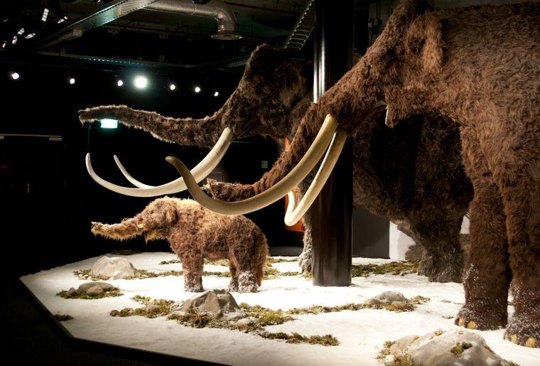 Scène mammouths.jpg