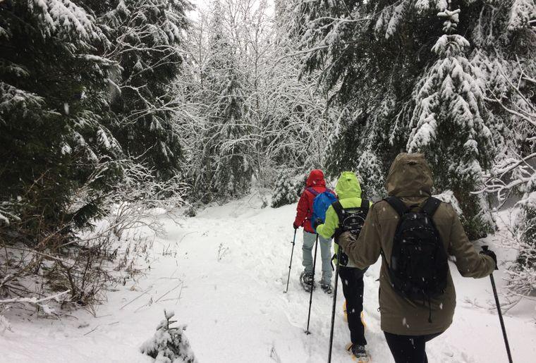 Raquettes dans la forêt enneigée.JPG
