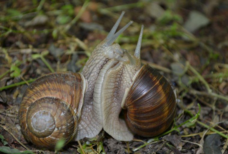 snail-937104_1920.jpg
