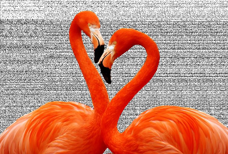 flamingo-3368587_1920.png