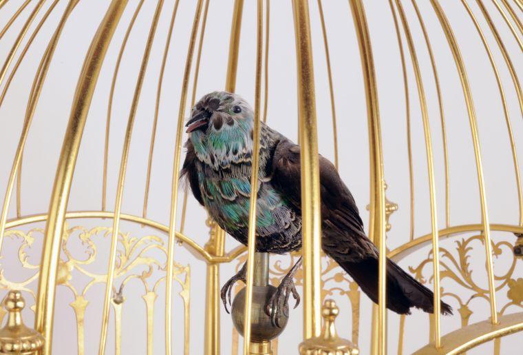 Image oiseau chanteurs démo.jpg