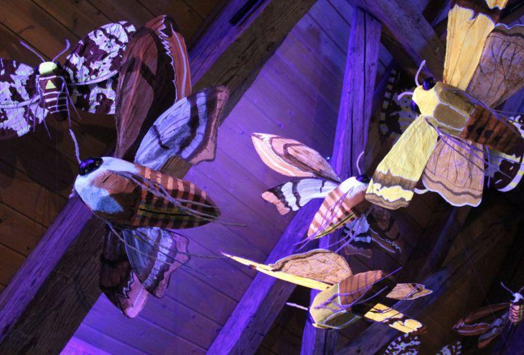 nuit blanche chez les insectes.jpg
