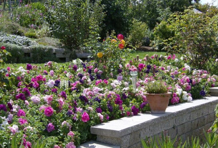 jardin-de-la-passion-16-9_1080.jpg