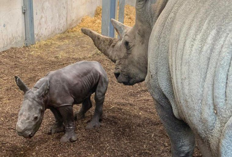 Bébé rhino.jpg