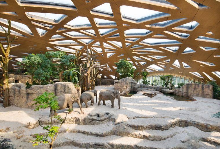 Zoo de Zurich_Parc éléphants 1.jpg