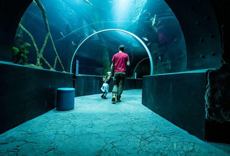 Aquatis-Aquarium-Vivarium-tunnel-©nuno-acacio-RVB.jpg
