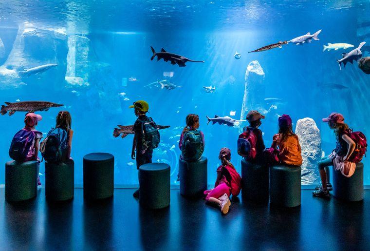 Aquatis-Aquarium-Vivarium-bassin-evolution-2©nuno-acacio-RVB.jpg