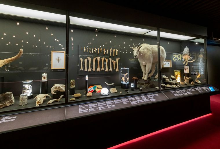 Bicentenaire-museum-geneve.jpg