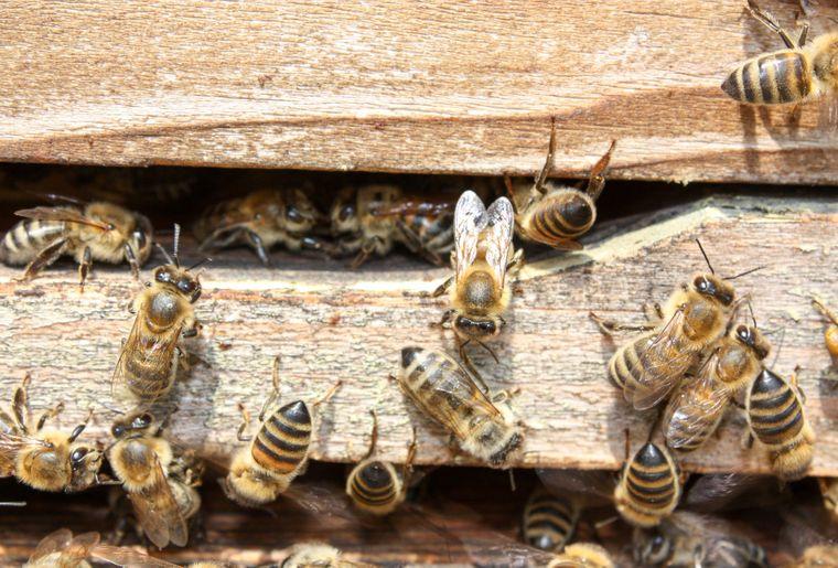 greenastic-parrainer-parrainage-ruche-2.jpg
