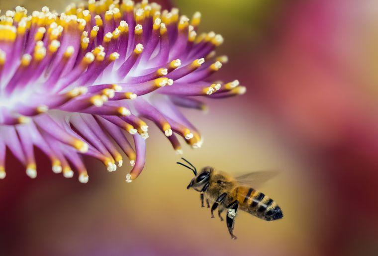 greenastic-parrainer-parrainage-ruche-1.jpg