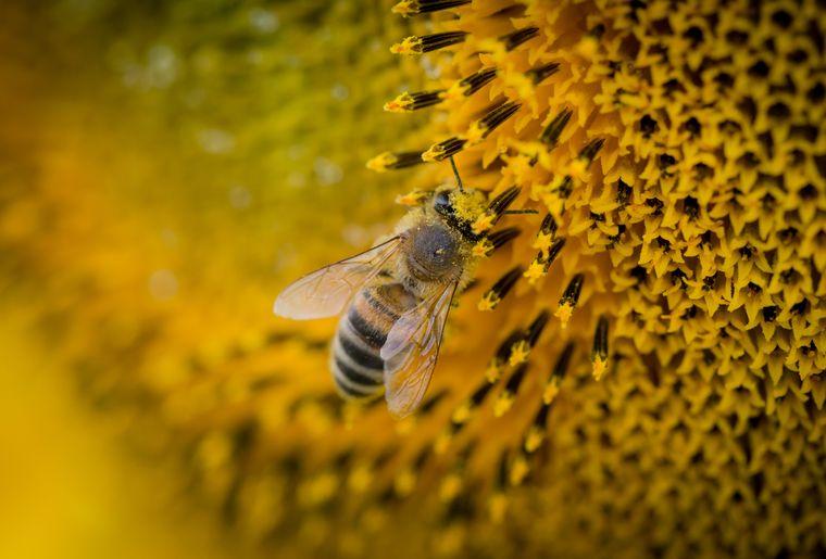 greenastic-parrainer-parrainage-ruche-6.jpg