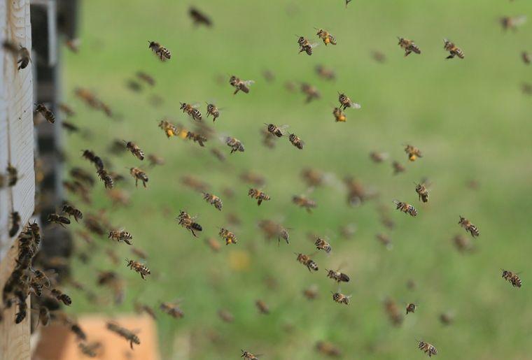 greenastic-parrainer-parrainage-ruche-7.jpg