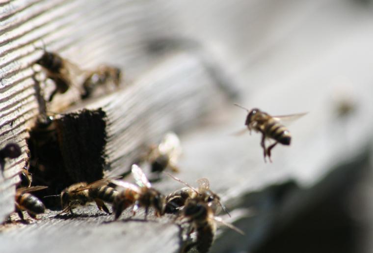 greenastic-parrainer-parrainage-ruche-8.png