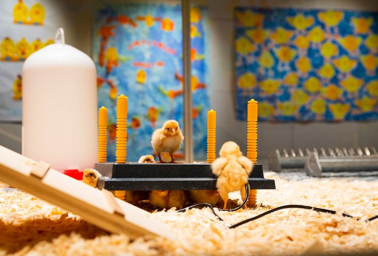 mhnf-expo-poussins-musee-fribourg.jpg