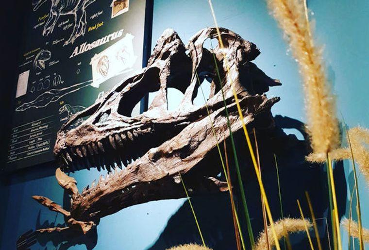 sauriermuseum-musee-dinosaure-bellach-soleure-2.jpg