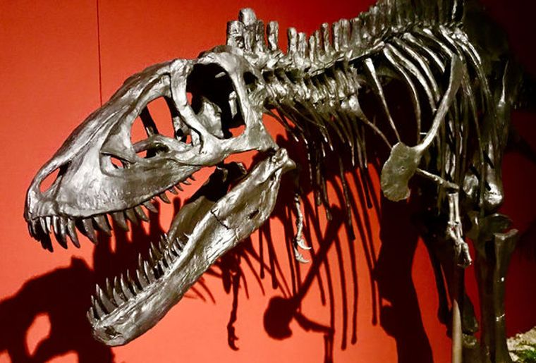 sauriermuseum-musee-dinosaure-bellach-soleure-3.jpg