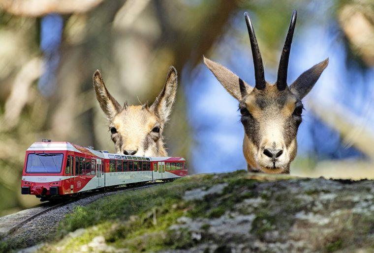 train-zoo-marecottes-3.jpg