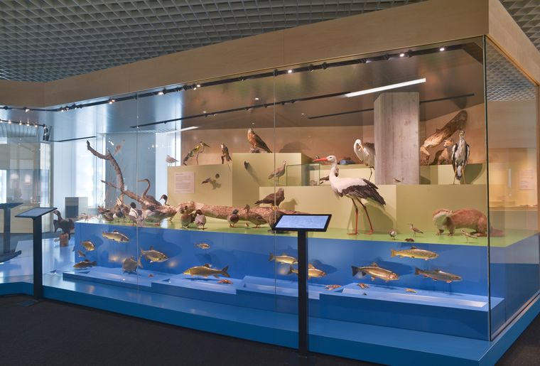 Naturmuseum_Solothurn_Ausstellung_6 ©Nicole Hänni.JPG