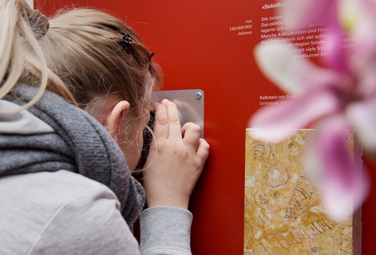 Naturmuseum_Solothurn_Ausstellung_12 ©Nicole Hänni.jpg