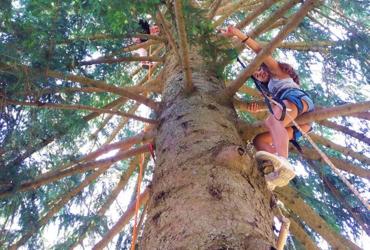 cime-grimpe-arbre-enfants.jpg