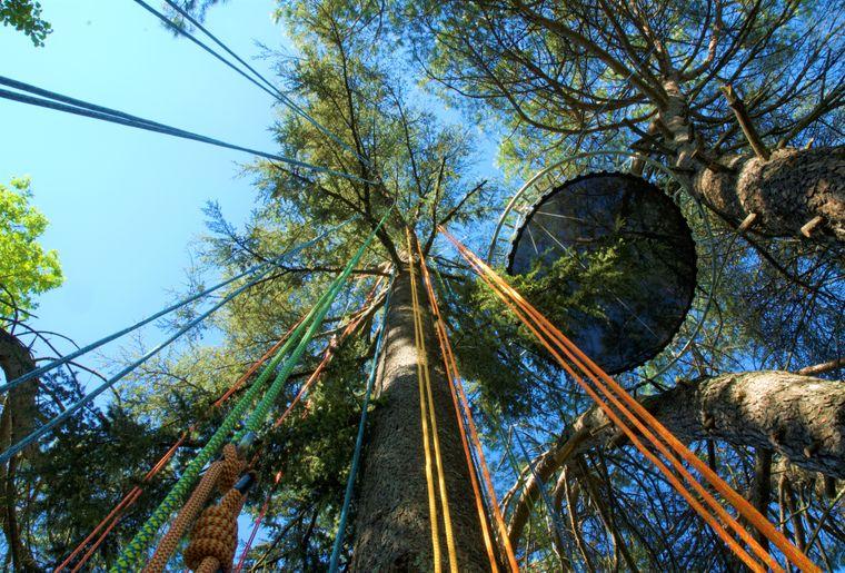 cime-grimpe-arbre-corde