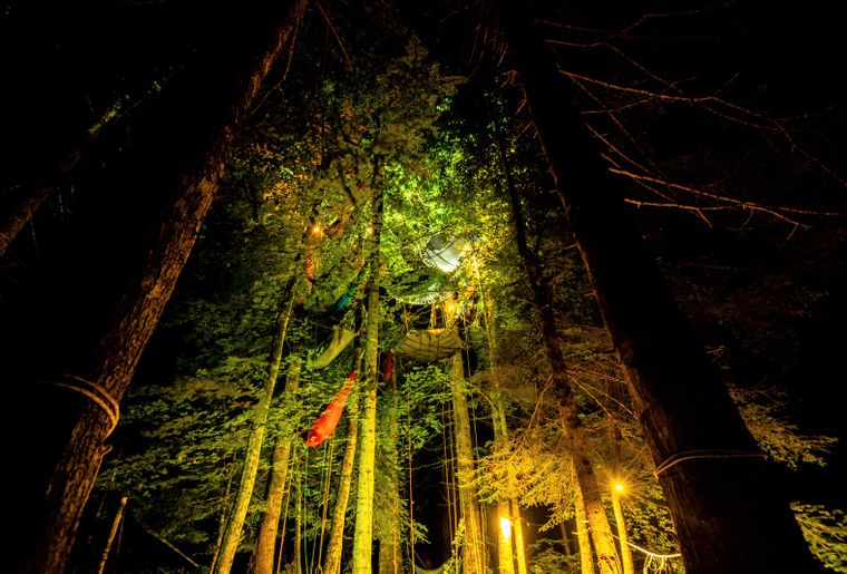 cime-grimpe-arbre-nuit