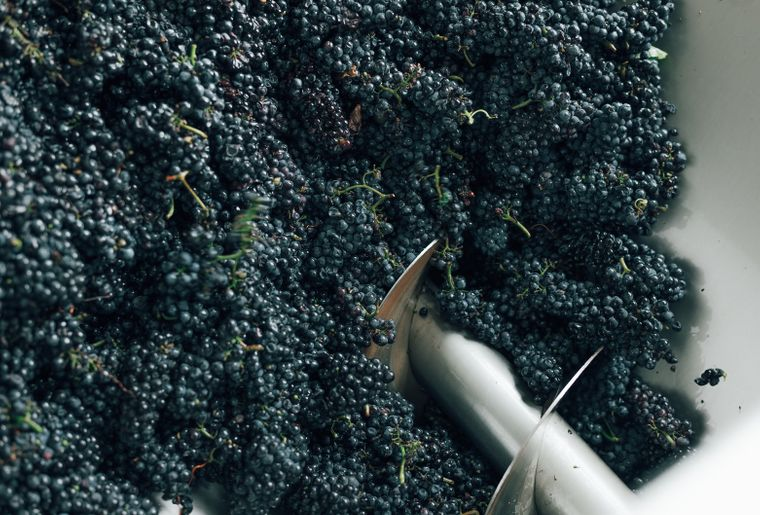 vendange-swiss-wine-4