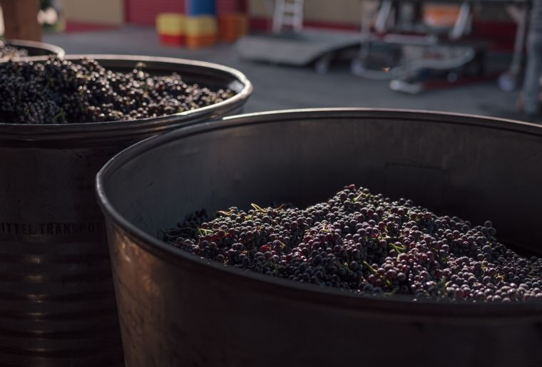 vendange-swiss-wine-9