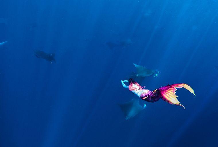 mermaiding-raies-mobulas.jpg