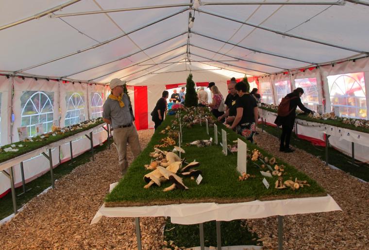 exposition-champignon-mont-sur-lausanne