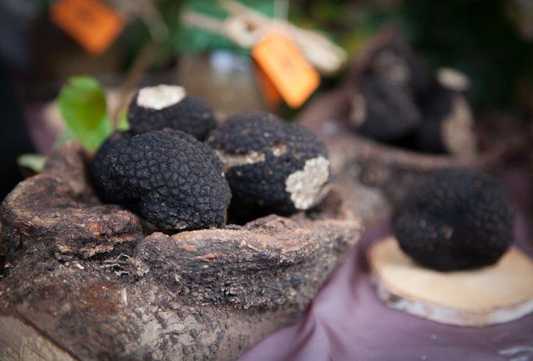 marché-truffe-bonvillars