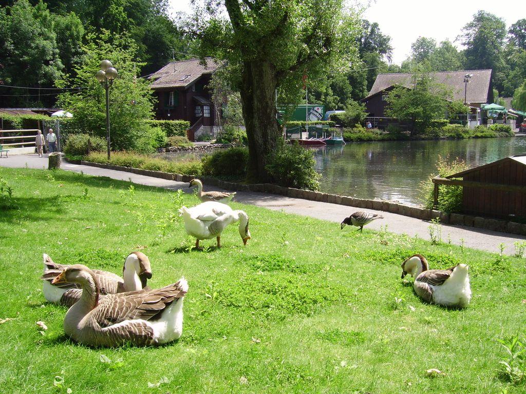 Le lac de Sauvabelin dans les hauts de Lausanne - balade au fil de l'eau et animaux de la ferme