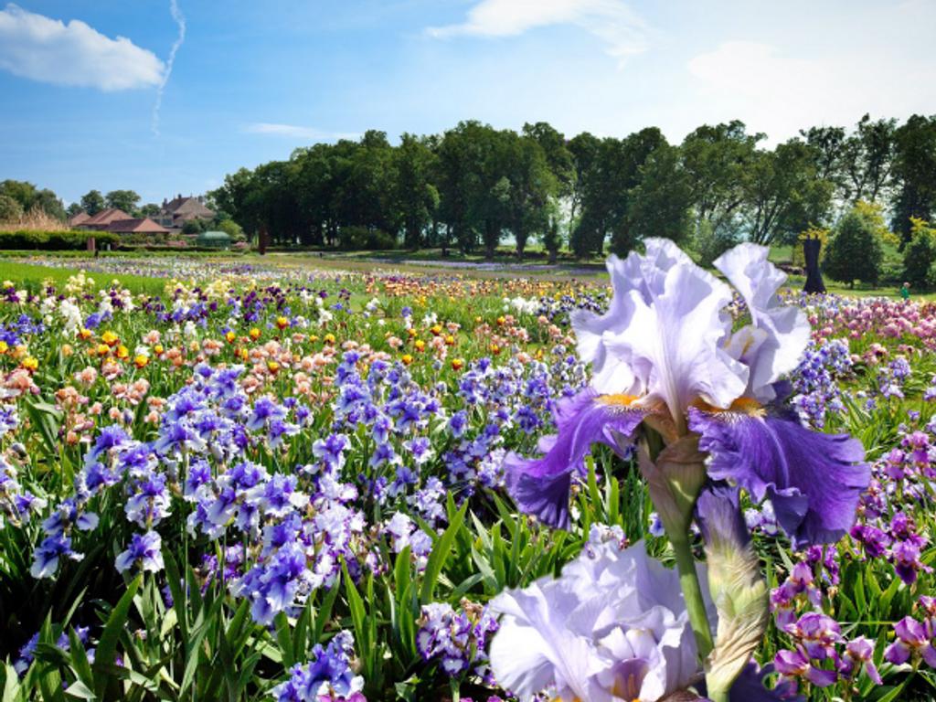 Jardins du Château de Vullierens - floralies d'iris
