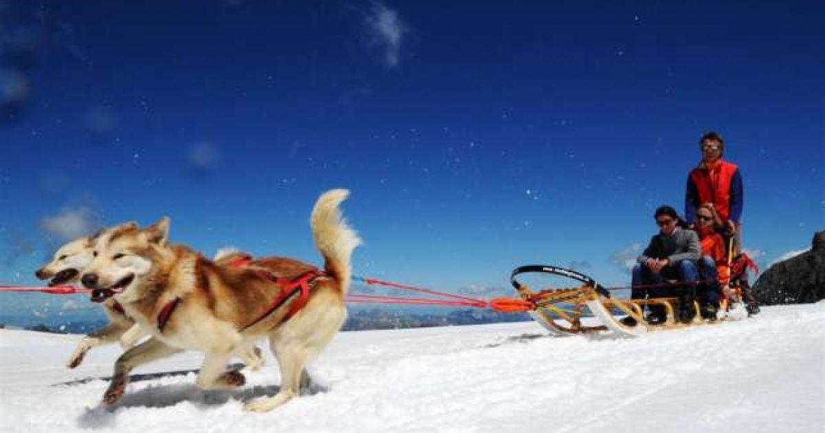 swiss mushing company - glacier 3000 - chiens de tra u00eeneaux